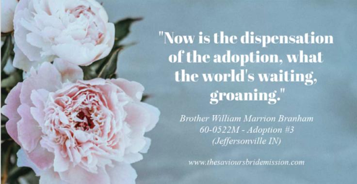 Adoption#3